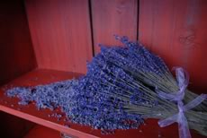 dried Lavender bundles